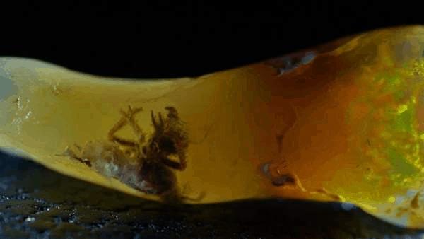 insecto en ópalo