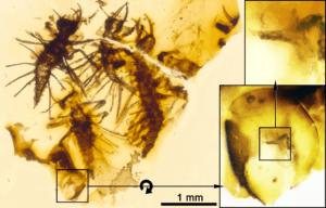 cascarón antiguo con larvas en ámbar